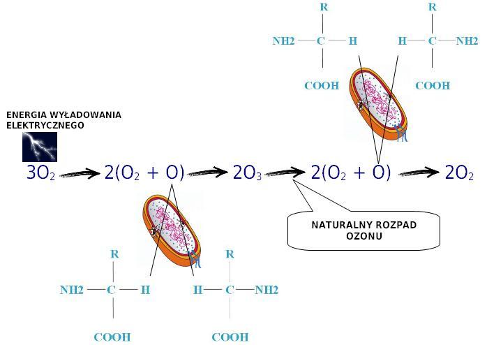 chemiczny rozpad cząsteczek ozonu